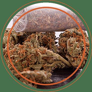 scrofano marijuana